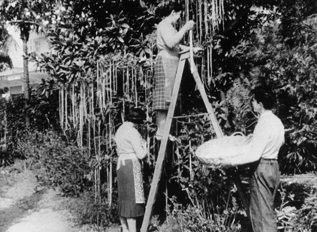 Συγκομιδή... σπαγγέτι στην Ιταλία (BBC, 1957)